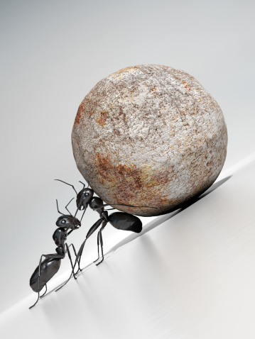 HOW MUCH DOES AN ANT WEIGHT