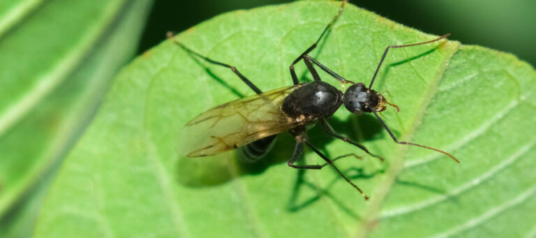 The Ants With Wings | Flying Ants