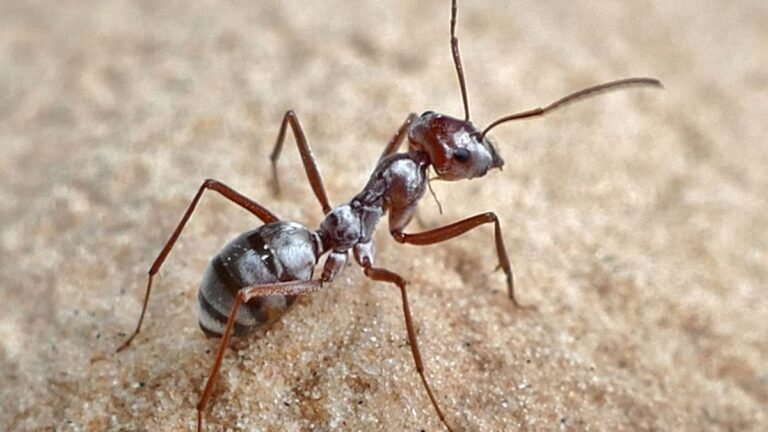 All You Need To Know About Ants